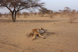 Food Worries Widen in Mauritania