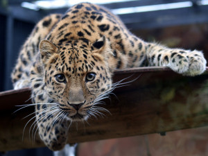 A leopard (or HSBC, or Monsanto) doesn't change its spots