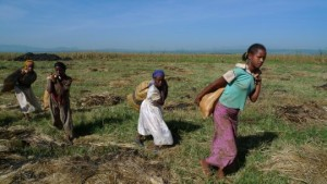 Migrations forcées : ces politiques néolibérales qui chassent les paysans de leurs terres