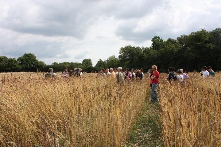 Face aux multinationales qui veulent s'emparer de la semence, les paysans résistent par l'idée de bien commun