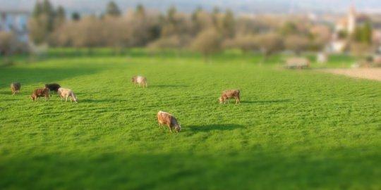 Pourquoi le lait de mauvaise qualité, néfaste pour la santé, risque de se généraliser