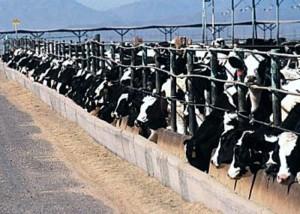 """Tierärztliches Forum zur """"Milchpreiskrise"""" und Plädoyer für ein Umdenken in der Agrarpolitik"""