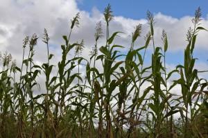 FAO:  rallenta la deforestazione a livello mondiale
