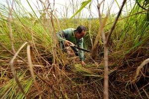 La FAO et le PNUD aident huit pays à revoir leurs stratégies d'adaptation au changement climatique