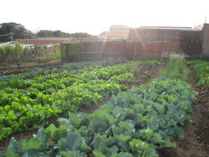Αστικοί λαχανόκηποι