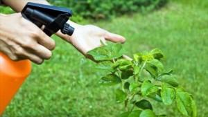 Científicos iraníes diseñan un nano-pesticida ecológico