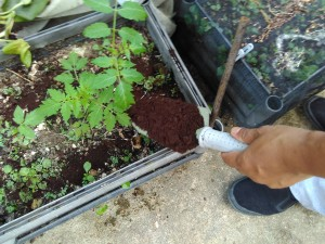 Χονγκ Κονγκ: Πλούσιο λίπασμα από κομποστοποιημένα σκουπίδια τροφών