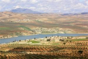 Resistenza contadina: gli olivicoltori siriani sfidano le bombe