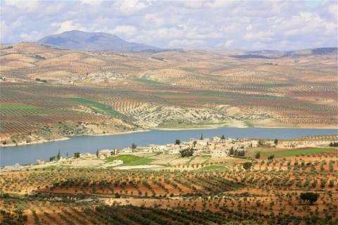 siria olivicoltori resistenza contadina