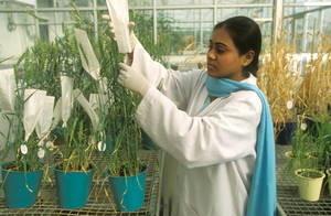 FAO: linee guida per la diversità genetica