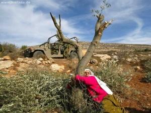 Destruction of Palestinian olive trees is a monstrous crime – The Economist