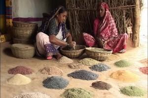 En Inde, la dissidence verte bouscule le système des castes