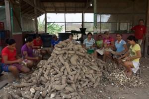 Soy Business Invades Brazil's Amazon Jungle