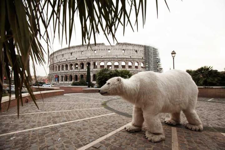 orso polare a Roma