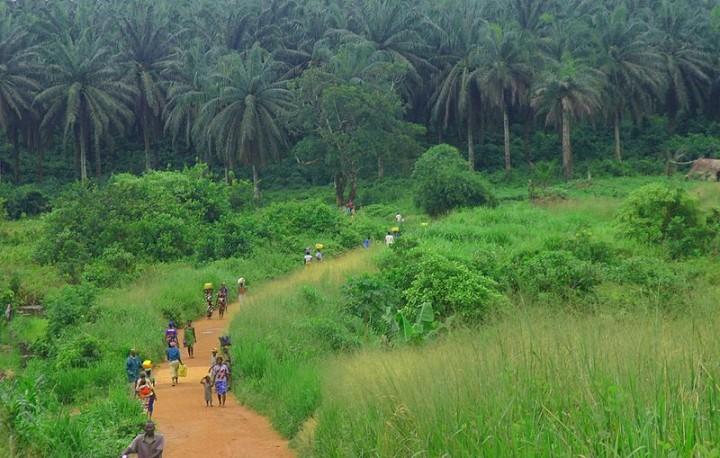 Sierra Leone: Land Grabbing e violenza, processo a Londra