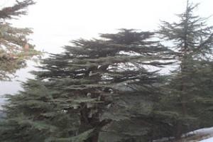 Líbano: Suelo fértil para la innovación