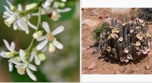 Diversité et biodiversité