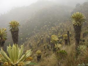 Colombia: Fallo histórico en contra de la minería en los páramos