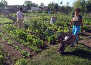 Nueva política agropecuaria en Argentina, menos apoyo a la agricultura familiar