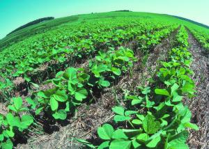 Waterless Farming: l'agricoltura senza acqua per il bene del pianeta