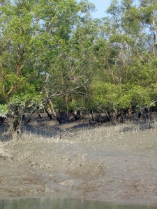 Bangladesh – Sundarbans: coal-laden coaster capsize warning