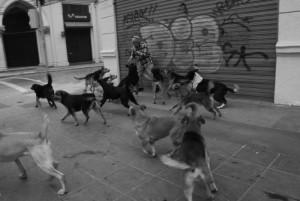 """Perros Abandonados: «La irresponsabilidad nos ha generado una crisis sanitaria"""""""