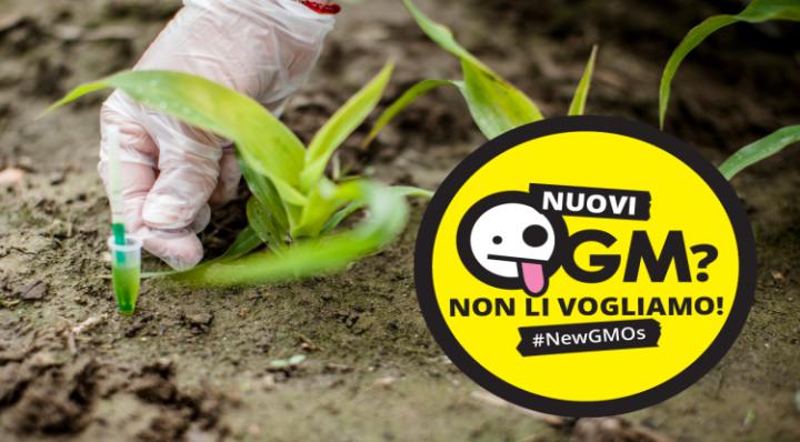 Nuovo tentativo di sdoganare gli OGM dopo il voto al Senato