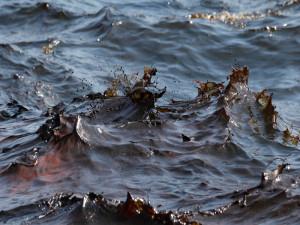 Sversamento di petrolio a Genova. È allarme per il mar ligure