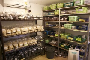 Seed storage in the tropics