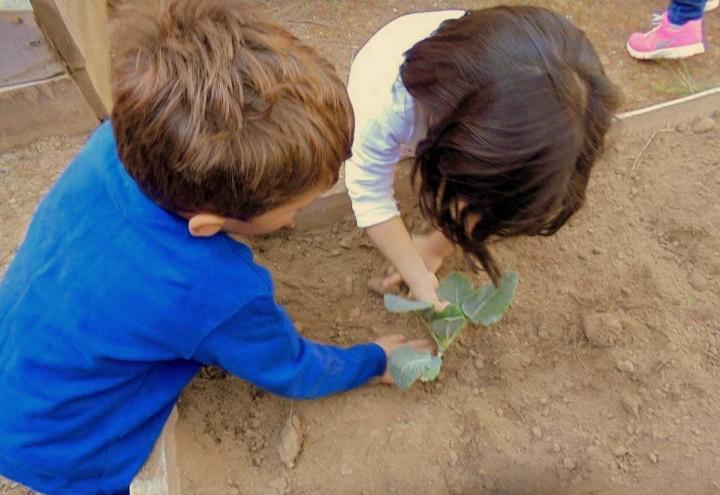 Σχολικοί Λαχανόκηποι: ο σπόρος στα χέρια ενός παιδιού μπορεί να κάνει τη διαφορά…