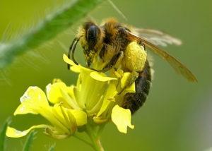 Stati Uniti. I pesticidi fanno strage di api