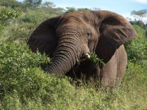 US Militärausgaben: der Elefant im Raum