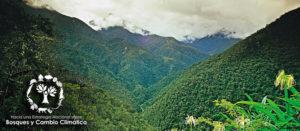 Reforestación en Oxapampa, Perú: retos y prioridades