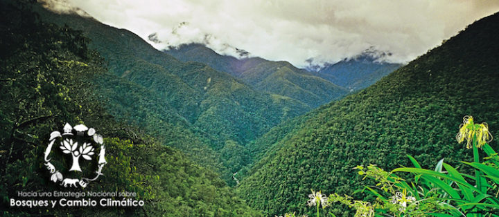 Reforestation in Oxapampa: Peru's Challenges and Priorities