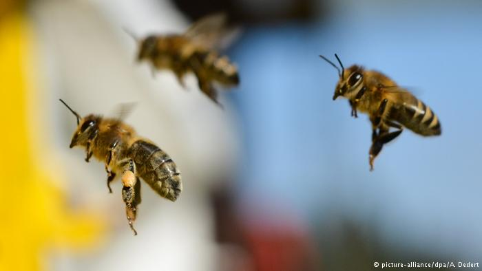 Pesticides also harmful to wild bees and butterflies, scientists say