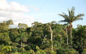 Τα πιο όμορφα δάση του κόσμου