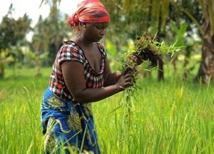 African Farmers Can Feed the World, If Only…