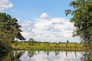 «El agronegocios y las grandes inmobiliarias vetaron la protección de humedales»