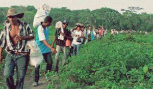 Triunfo campesino en Colombia: 19 empresas obligadas a devolver tierras y a suspender la explotación minera