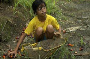 Amnesty: rapporto sullo scandalo dell'olio di palma che viola i diritti dei bambini