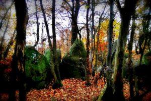 Il bosco segreto delle streghe