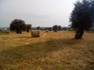 Enésima tragedia en los guetos de Apulia