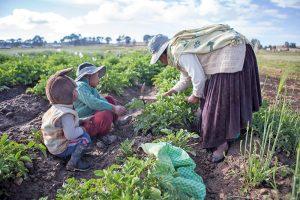 Più agrobusiness (e più lotte)