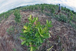 Agroecología: «Menos agrotóxicos y más alimentos sanos»