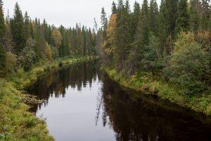 Greenpeace: l'industria della carta sta distruggendo le ultime foreste