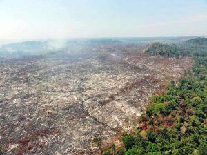 Madeireira e três pessoas são condenadas a pagar mais de 10 milhões por desmatamento