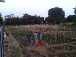 Το παράδειγμα της Κομοτηνής: Δίκτυο συνεργατικών λαχανόκηπων εξασφαλίζει τροφή σε 240 οικογένειες