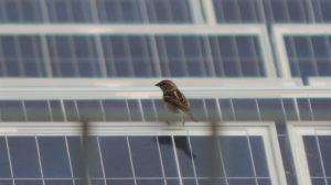 Si arresta l'avanzata globale del carbone, grazie anche alle rinnovabili