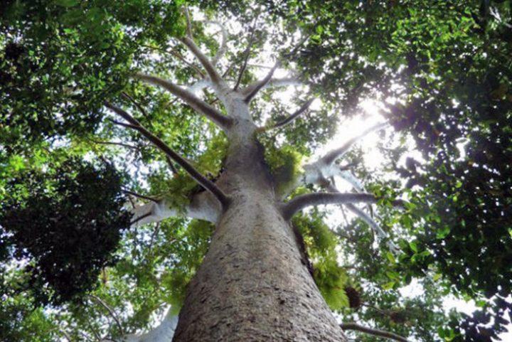 La búsqueda de combustibles agota los bosques