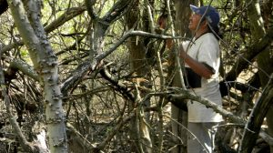 Exiliados por los desmontes y los alambres